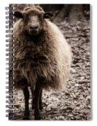 Sheep Stare Spiral Notebook