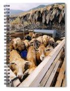 Sheeps Enclosure Spiral Notebook