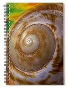 Shell Spiral Spiral Notebook