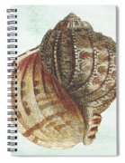 Shell Treasure-c Spiral Notebook