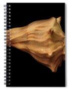Shells Of The Gulf Coast 9 Spiral Notebook