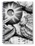 Shellscape In Monochrome Spiral Notebook