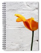 Seriously Orange - Sheltered Spiral Notebook