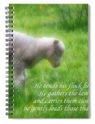 Shepherd Spiral Notebook