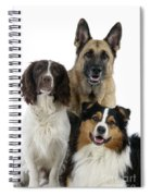 Shepherds With English Springer Spaniel Spiral Notebook