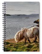 Shetland Pony At Shore  Shetland Spiral Notebook