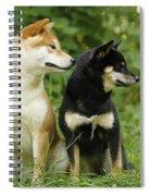 Shiba Inu Dogs Spiral Notebook
