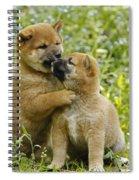 Shiba Inu Puppies Spiral Notebook