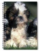 Shih Tzu Puppy Dogs Spiral Notebook