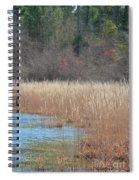 Shimmering Gold Grasslands Spiral Notebook