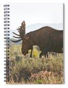 Shiras Bull Moose Spiral Notebook