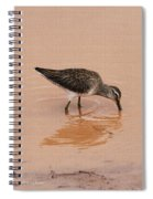 Shore Bird At Whitewater Draw Spiral Notebook