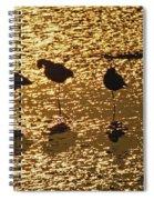 Shore Birds Spiral Notebook