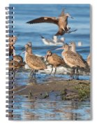 Shorebirds Flocking At Bodega Bay Spiral Notebook