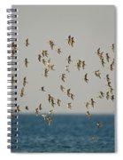 Shorebirds Flying Spiral Notebook