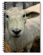 Shorn Sheep Spiral Notebook