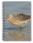 Short-billed Dowitcher, Breeding Spiral Notebook