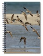 Short-billed Dowitchers Flying Spiral Notebook