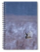 Short Eared Owl Hunting 3 Spiral Notebook