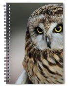 Short Eared Owl Portrait Spiral Notebook