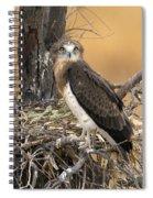 Short-toed Snake Eagle Circaetus Gallicus Spiral Notebook