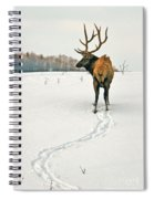 Shortest Distance Elk Spiral Notebook