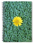 Show Off Spiral Notebook