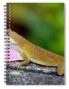 Showing Off Spiral Notebook
