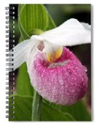 Showy Lady's Slipper Spiral Notebook
