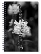 Obedient Plant In Black And White Spiral Notebook