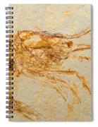 Shrimp Fossil Spiral Notebook