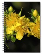 Shrubby St Johnswort Dsmf094 Spiral Notebook