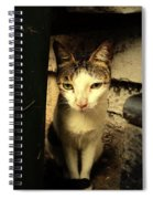 Shy Cat Spiral Notebook