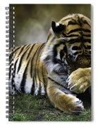 Shy Spiral Notebook