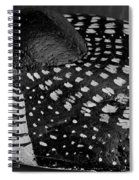 Shy Loon - Painted Rock - Seabird - One Of A Kind Spiral Notebook