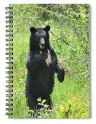 Shy Shadow Spiral Notebook