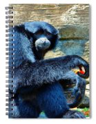 Siamang Having A Snack Spiral Notebook
