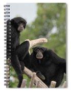 Siamang Monkeys Spiral Notebook