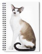 Siamese Cat Spiral Notebook