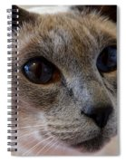 Siamese Cat Peers Into Unknown Spiral Notebook