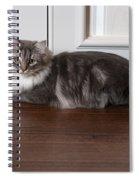 Siberian Forest Cat Spiral Notebook