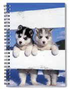 Siberian Husky Puppies Spiral Notebook