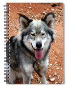 Siberian Husky With Blue And Brown Eyes Spiral Notebook