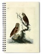 Siberian Owl And Acadian Owl Spiral Notebook