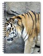 Siberian Tiger Panthera Tigris Altaica Usa Spiral Notebook