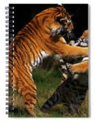 Siberian Tigers In Fight Spiral Notebook