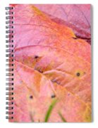 Side By Side They Fall Spiral Notebook