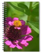 Side-saddled Bee Spiral Notebook