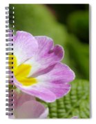 Side View Of A Spring Pansy Spiral Notebook