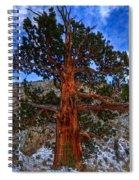 Sierra Pine Spiral Notebook